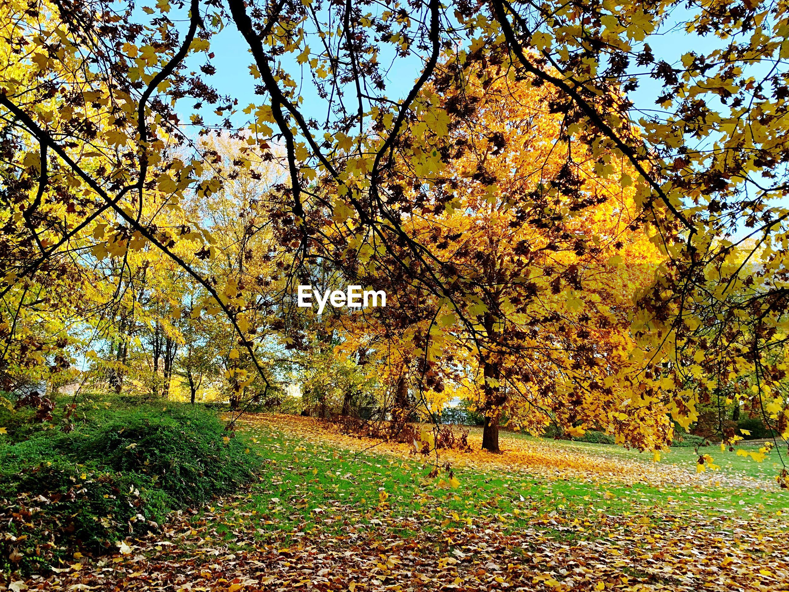 TREES AND PLANTS ON FIELD DURING AUTUMN