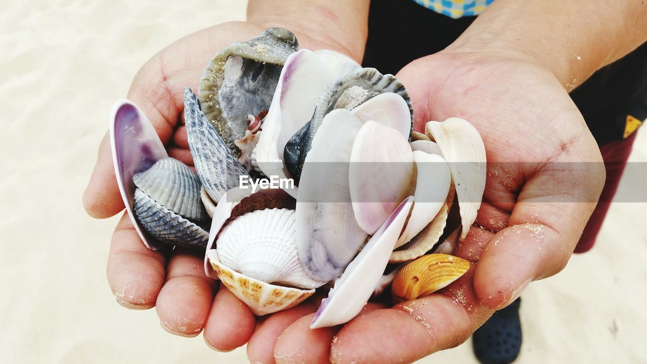 Close-up of man holding seashells on beach