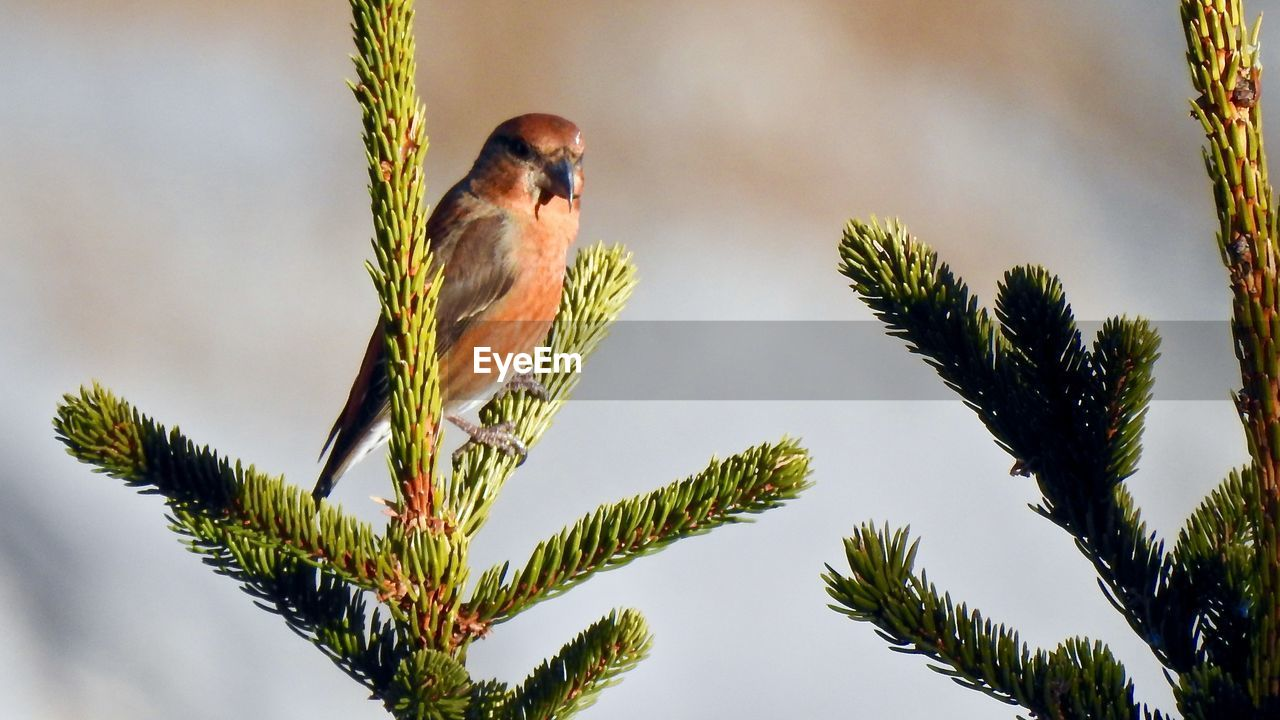 perching, bird, one animal, tree, animals in the wild, animal themes, animal wildlife, no people, nature, day, beauty in nature, branch, outdoors, sparrow, sky, close-up