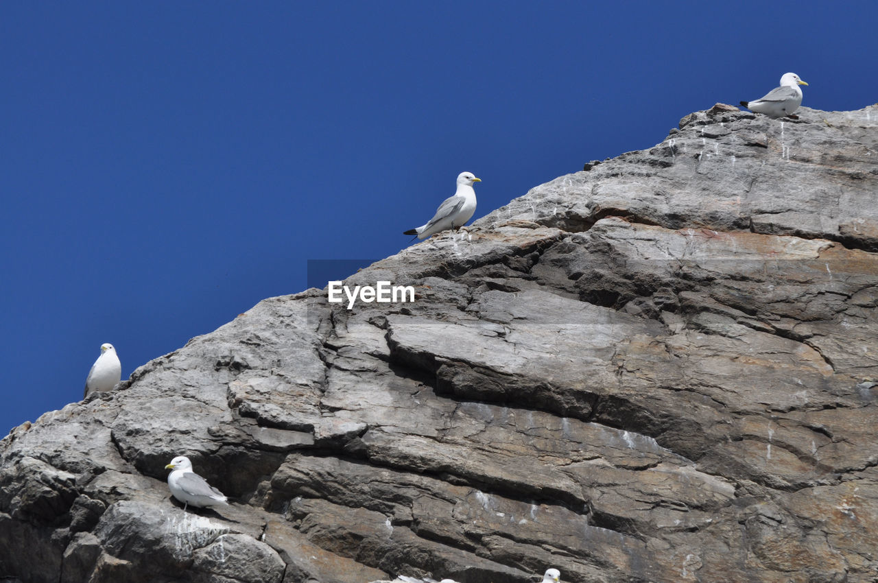 Low Angle View Of Seagulls Perching On Rock Against Clear Blue Sky