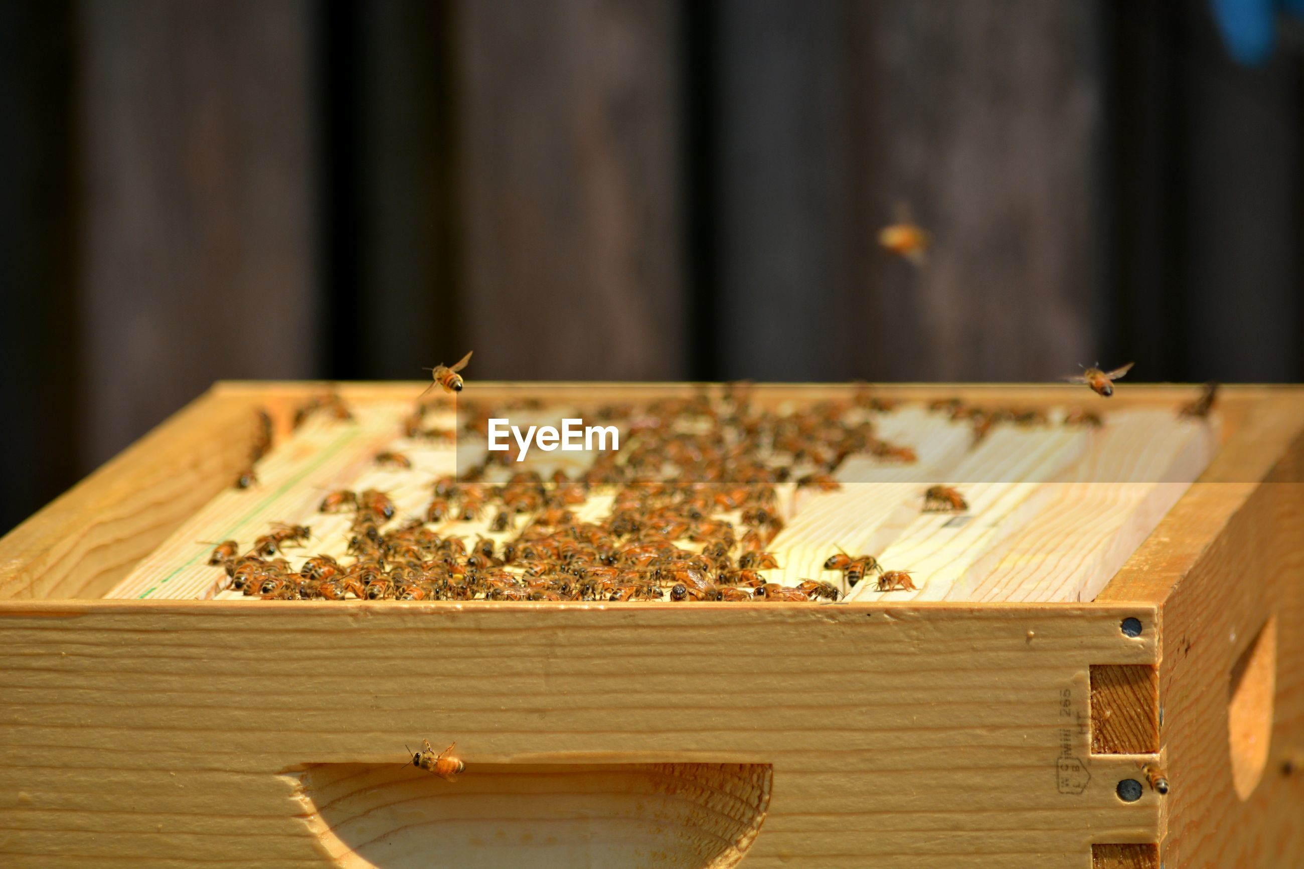 Opened top of young bee colony's hive