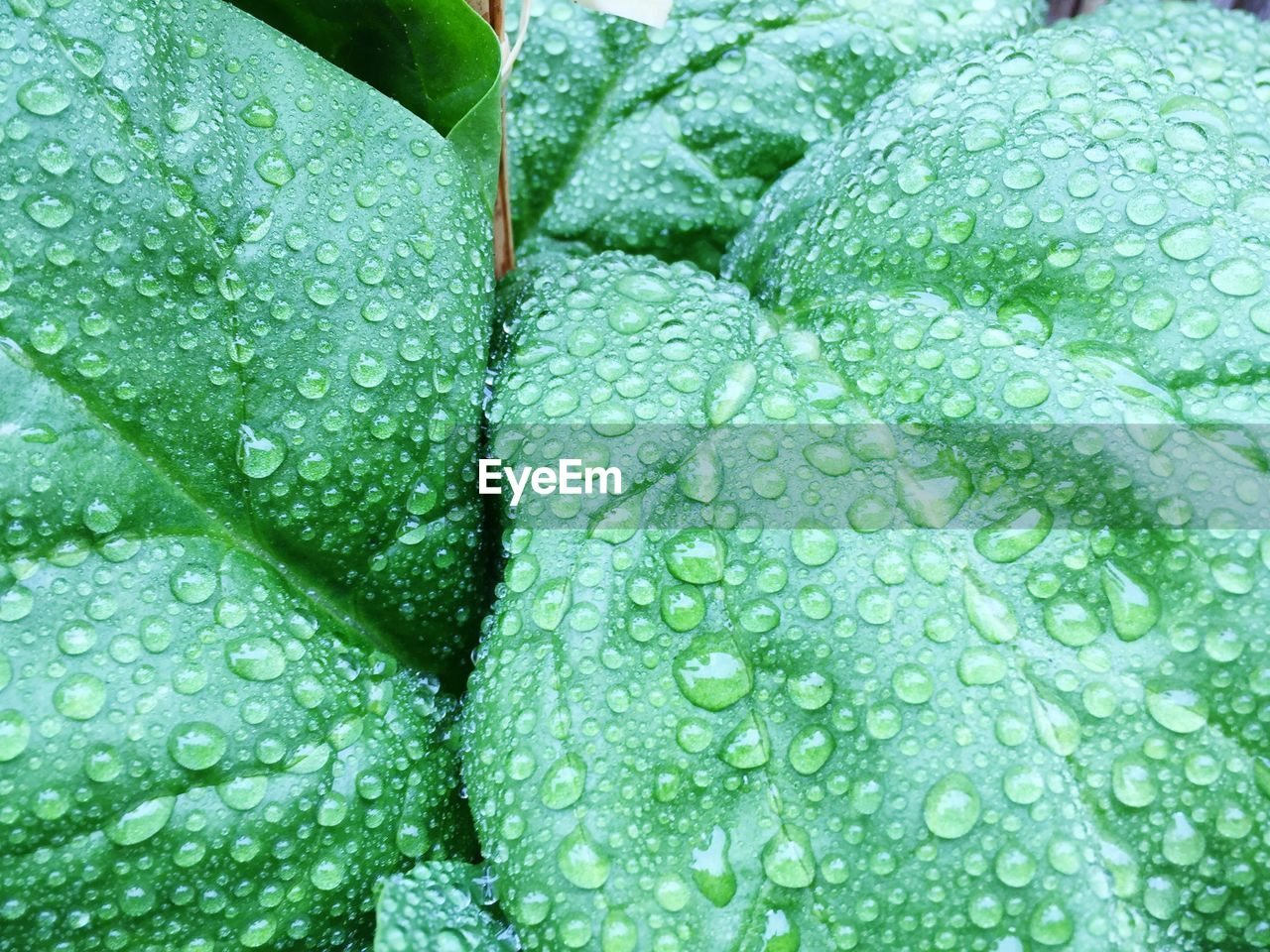 Full frame shot of wet plants during rainy season