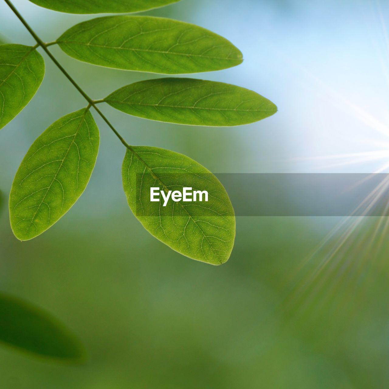 leaf, plant part, green color, plant, growth, nature, close-up, beauty in nature, day, no people, outdoors, focus on foreground, leaves, vulnerability, leaf vein, fragility, tranquility, selective focus, freshness, sunlight