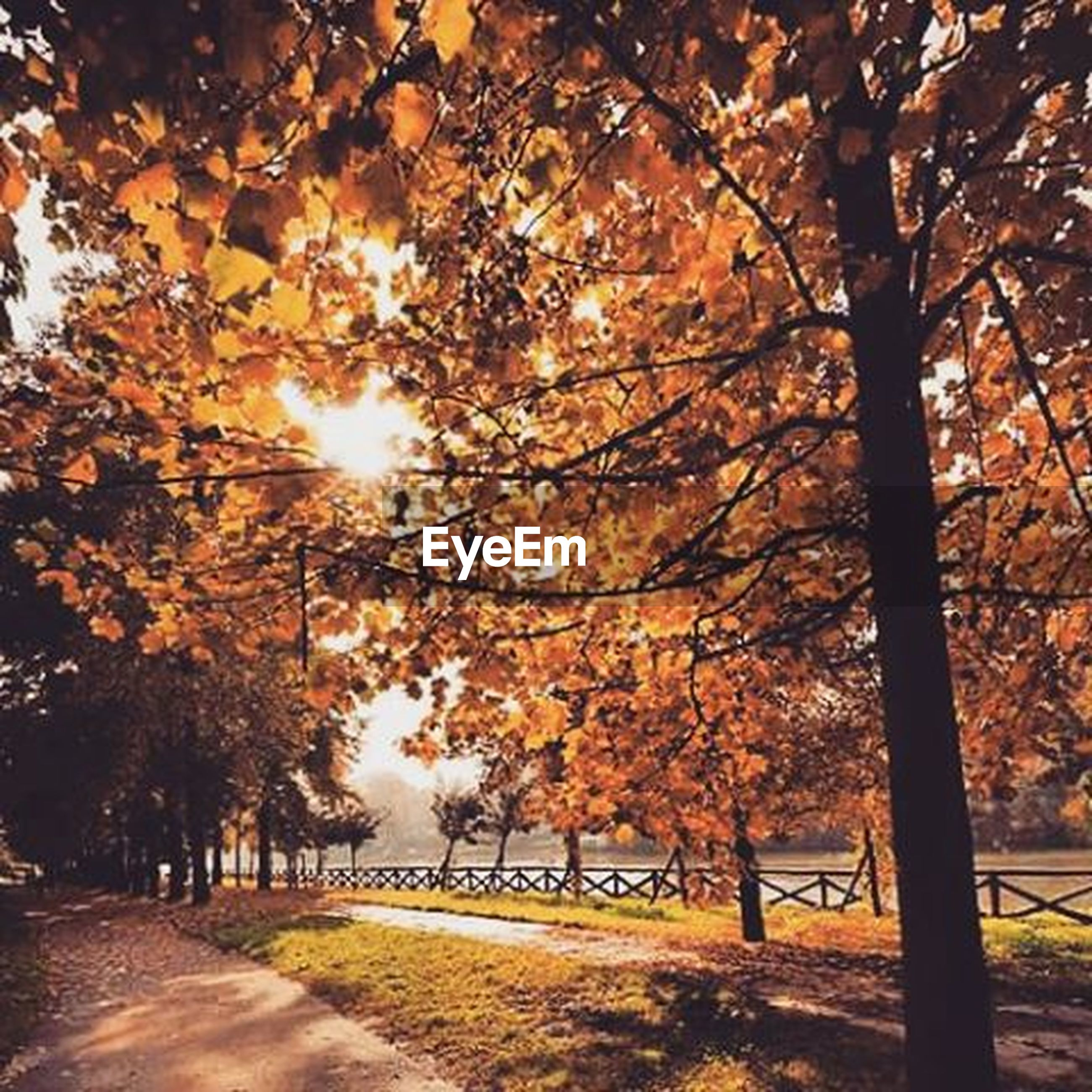 tree, autumn, branch, season, change, sunlight, nature, tranquility, orange color, beauty in nature, leaf, growth, road, the way forward, sun, sunset, tranquil scene, street, footpath, scenics