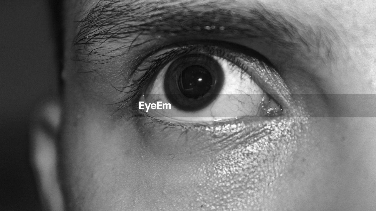 human eye, eyeball, eyelash, eyesight, human body part, one person, real people, iris - eye, sensory perception, vision, close-up, looking at camera, eyebrow, human skin, eyelid, portrait, indoors, day, people
