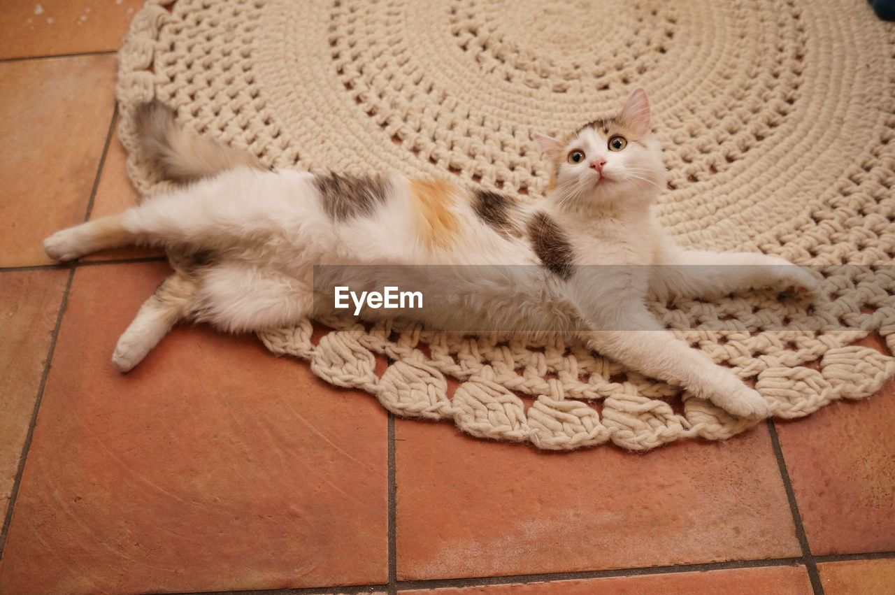 domestic cat, one animal, cat, feline, relaxation, pets, animal themes, domestic, animal, domestic animals, mammal, resting, vertebrate, no people, indoors, high angle view, lying down, white color, portrait, flooring, whisker, tiled floor