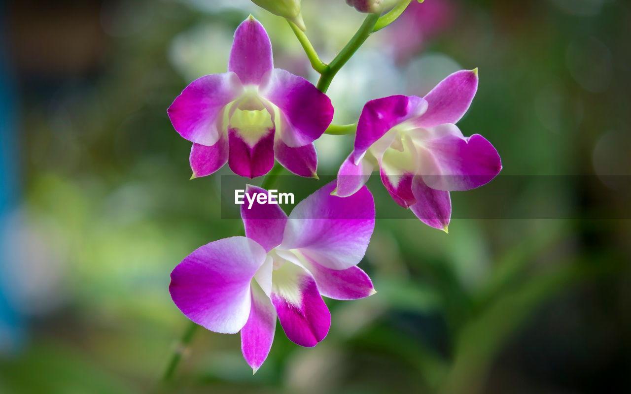 flower, petal, beauty in nature, nature, fragility, growth, plant, freshness, focus on foreground, no people, close-up, blooming, day, outdoors, flower head