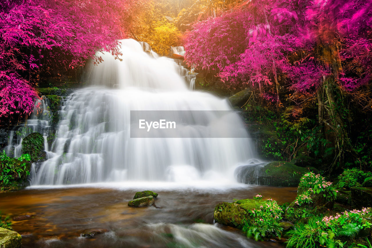 plant, beauty in nature, scenics - nature, motion, water, waterfall, tree, forest, long exposure, flowing water, no people, flowing, nature, blurred motion, land, rock, growth, day, rock - object, rainforest, power in nature, outdoors, falling water