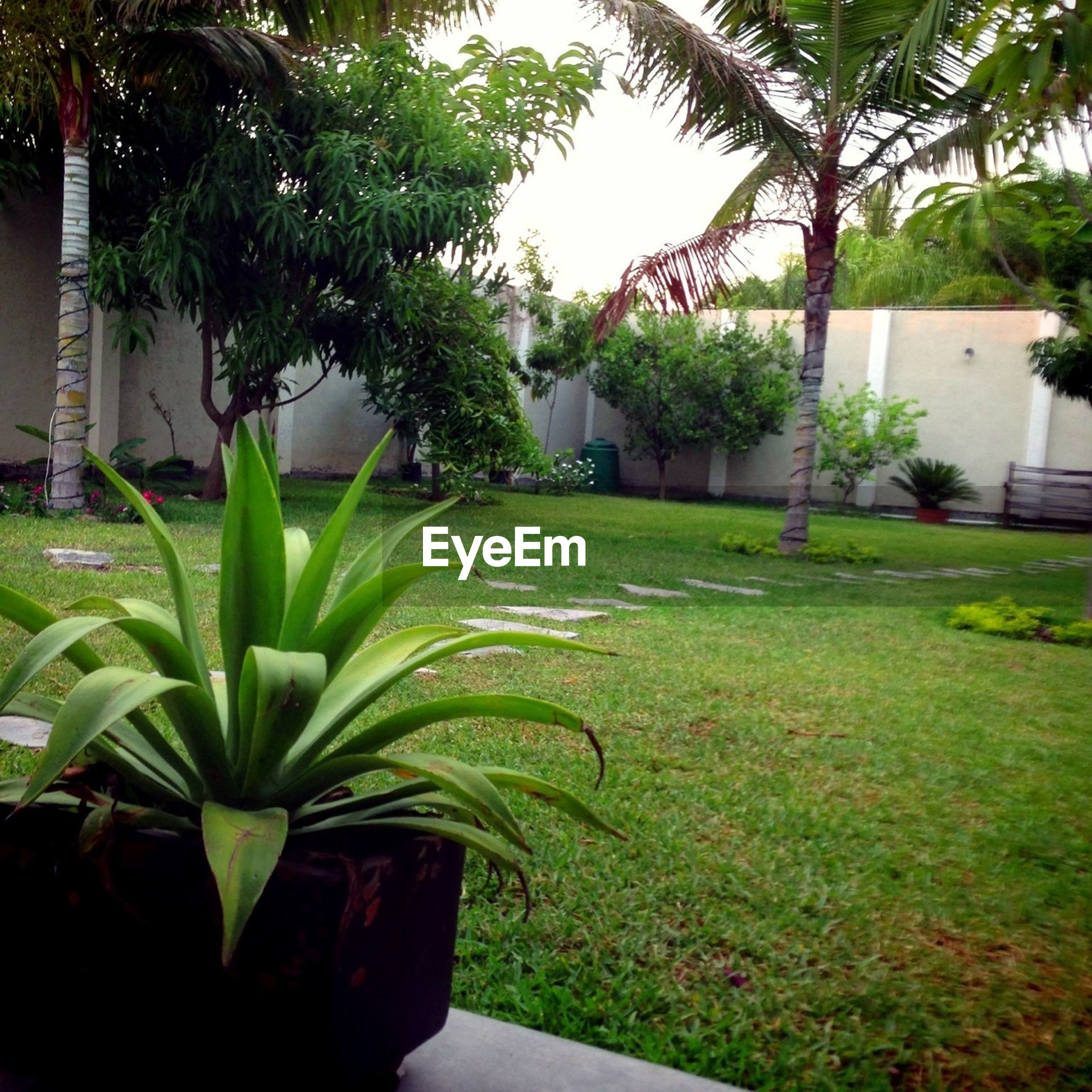 green color, building exterior, tree, built structure, architecture, growth, grass, house, plant, lawn, front or back yard, nature, green, residential structure, sunlight, day, palm tree, sky, no people, outdoors