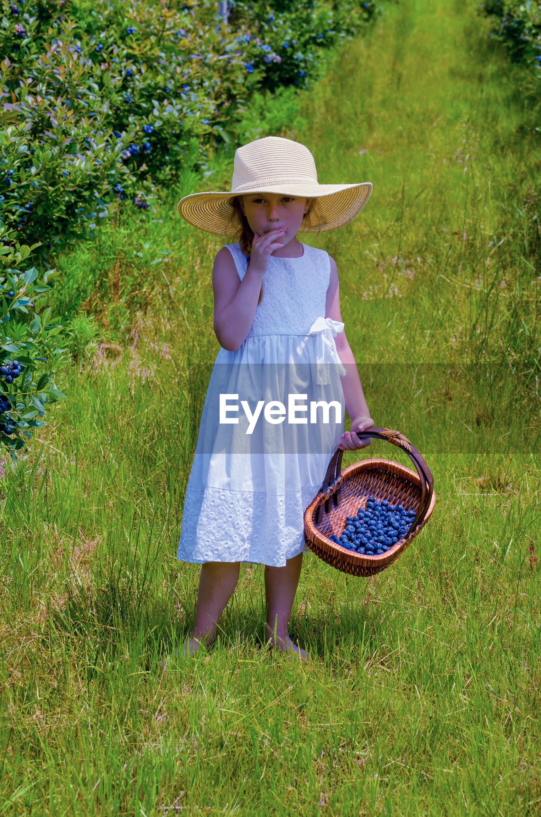 Little girl tasting fresh picked blue berries with a basket of fruit in a floppy hat