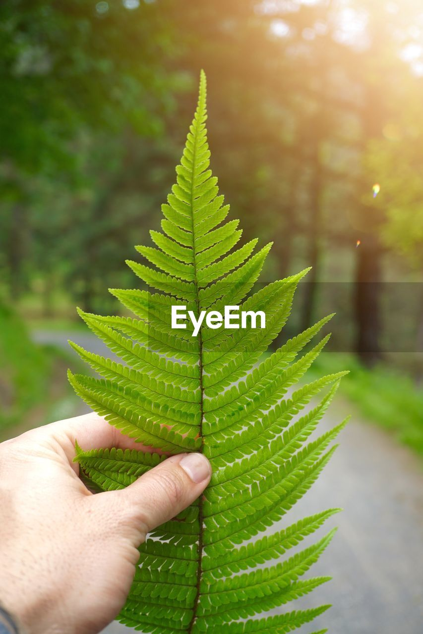 hand, human hand, leaf, plant part, green color, human body part, focus on foreground, one person, close-up, nature, plant, unrecognizable person, holding, day, leaf vein, body part, personal perspective, outdoors, real people, growth, finger, fern, leaves