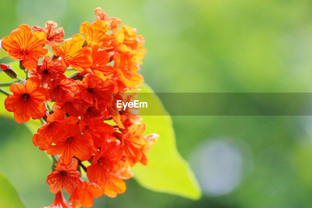 flower, beauty in nature, fragility, nature, petal, freshness, growth, plant, flower head, close-up, day, no people, focus on foreground, outdoors, blooming