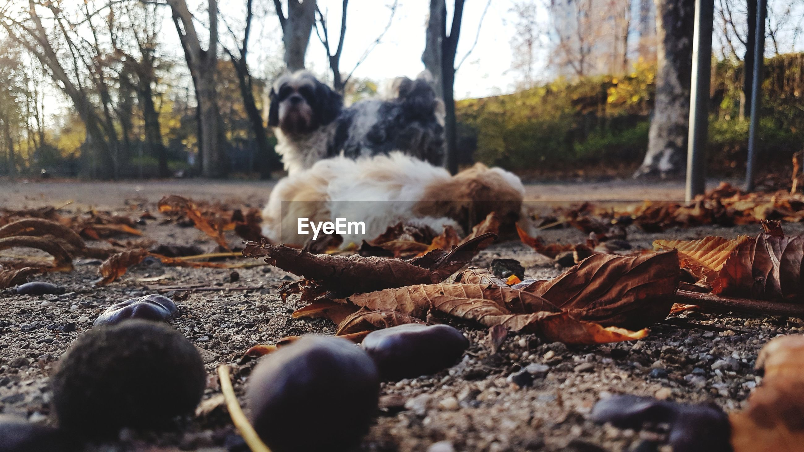 VIEW OF A DOG LYING ON GROUND