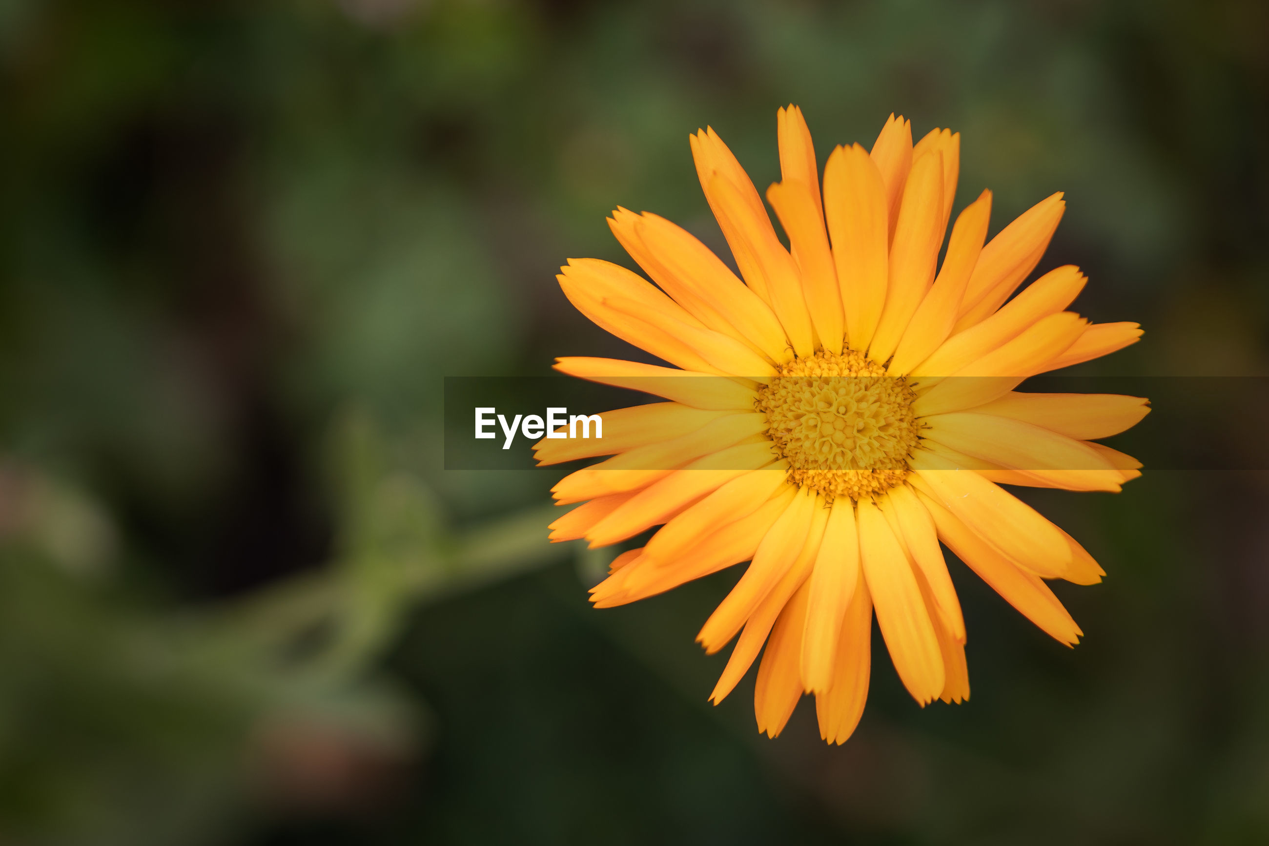 CLOSE-UP OF YELLOW FLOWER AGAINST ORANGE PLANTS