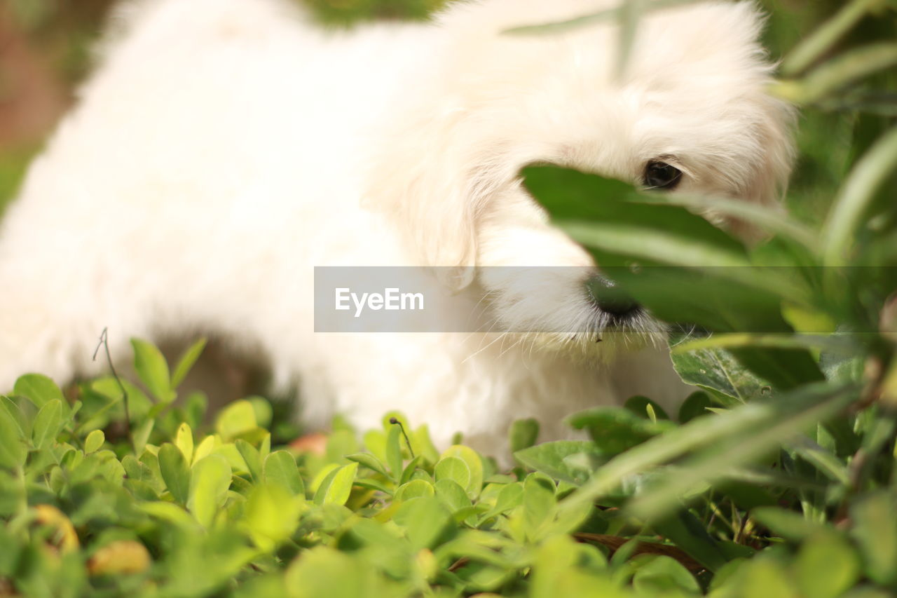 animal themes, one animal, animal, mammal, pets, domestic animals, domestic, dog, vertebrate, canine, white color, selective focus, no people, plant, plant part, leaf, close-up, day, animal body part, relaxation, animal head