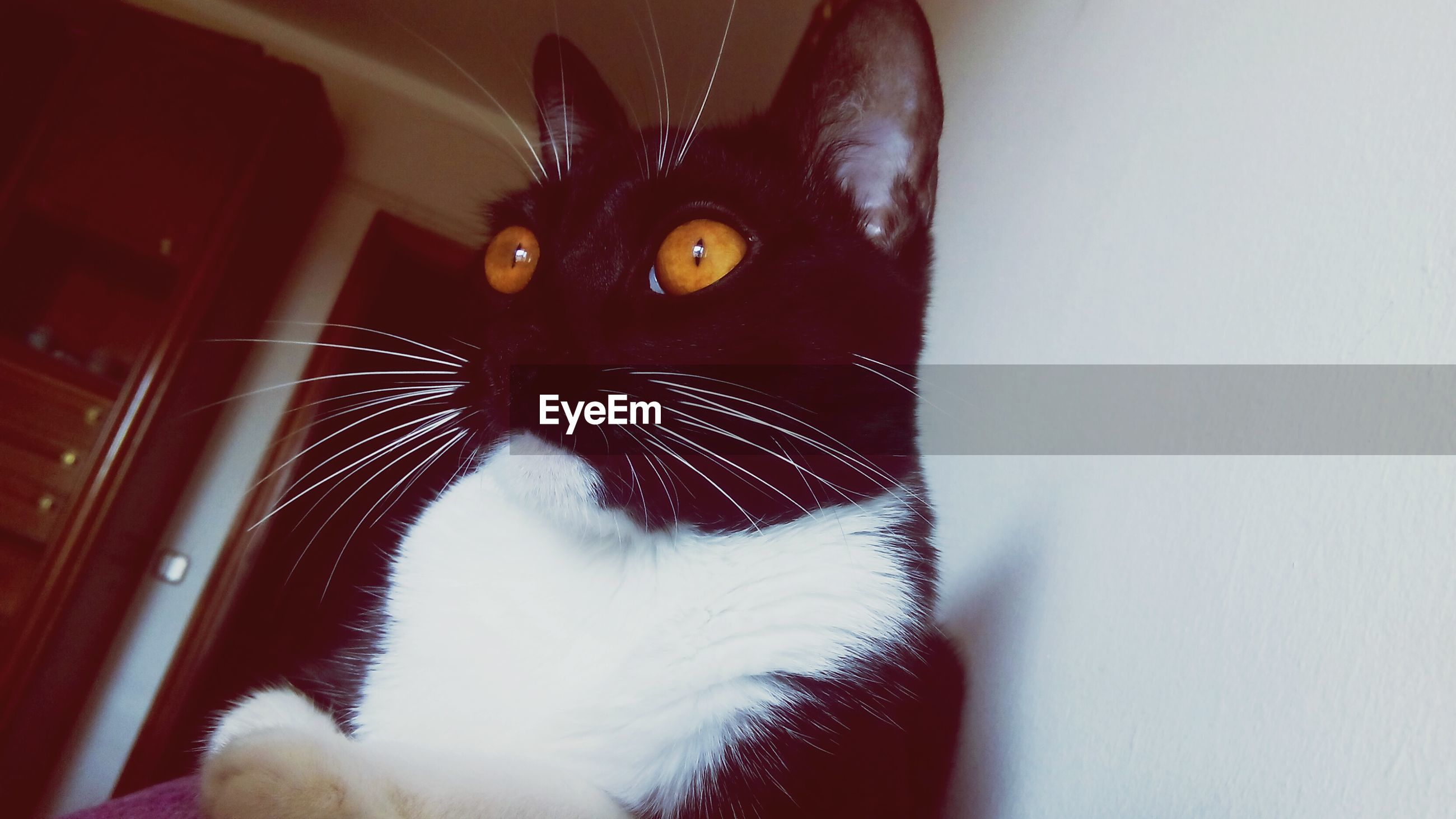 animal themes, one animal, pets, domestic animals, domestic cat, mammal, cat, feline, whisker, indoors, close-up, animal body part, black color, animal head, zoology, animal eye, wildlife, insect, vertebrate, no people