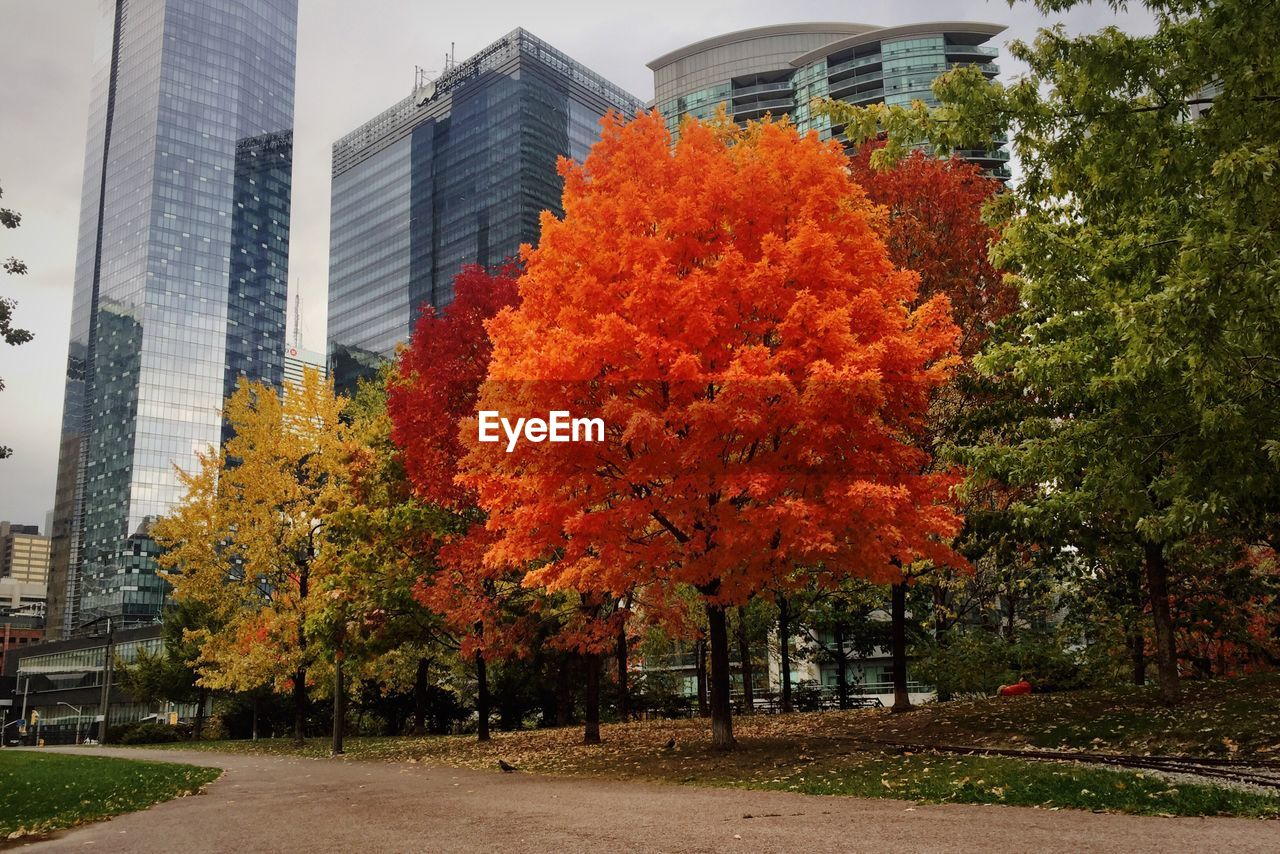 architecture, building exterior, tree, skyscraper, city, autumn, change, built structure, growth, no people, outdoors, modern, day, nature, cityscape