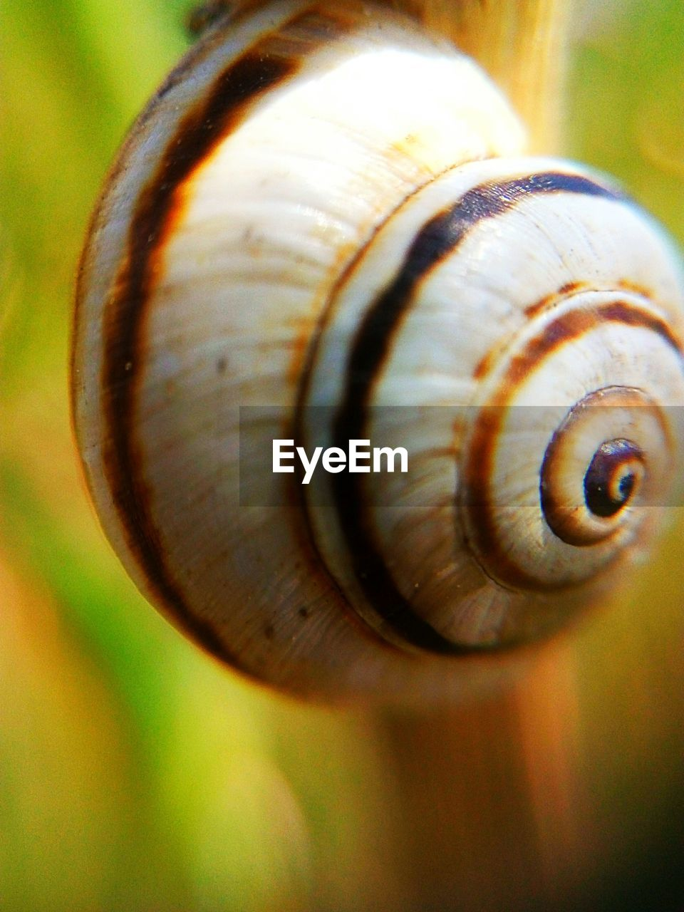 shell, snail, mollusk, close-up, animal shell, gastropod, animal wildlife, animal, invertebrate, focus on foreground, animal themes, animals in the wild, one animal, day, selective focus, no people, spiral, animal body part, boredom, pattern