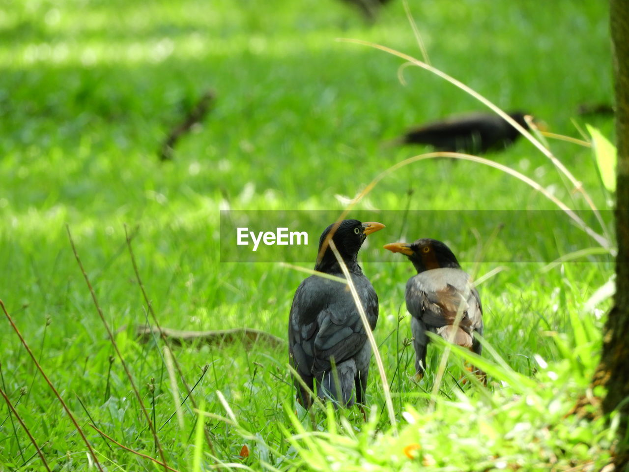 animal themes, animal, bird, group of animals, plant, animal wildlife, vertebrate, green color, animals in the wild, grass, land, nature, field, no people, day, two animals, young animal, selective focus, focus on foreground, young bird, outdoors, animal family, care