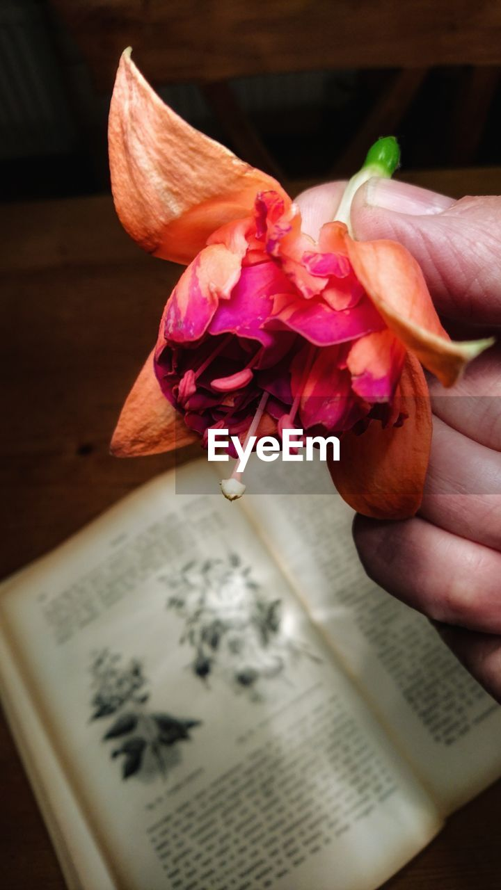 human hand, human body part, one person, flower, human finger, holding, text, real people, close-up, book, indoors, freshness, day