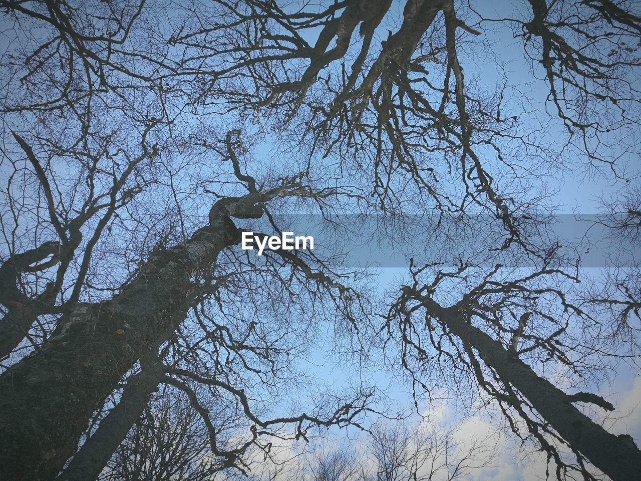branch, tree, low angle view, bare tree, nature, beauty in nature, no people, outdoors, day, tranquility, forest, clear sky, sky, growth, scenics, freshness