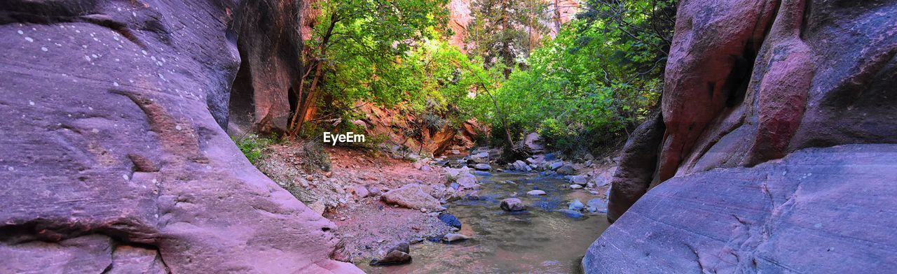 tree, plant, rock, beauty in nature, rock - object, solid, forest, nature, tranquility, day, no people, land, growth, water, scenics - nature, tranquil scene, non-urban scene, rock formation, outdoors, flowing water, flowing