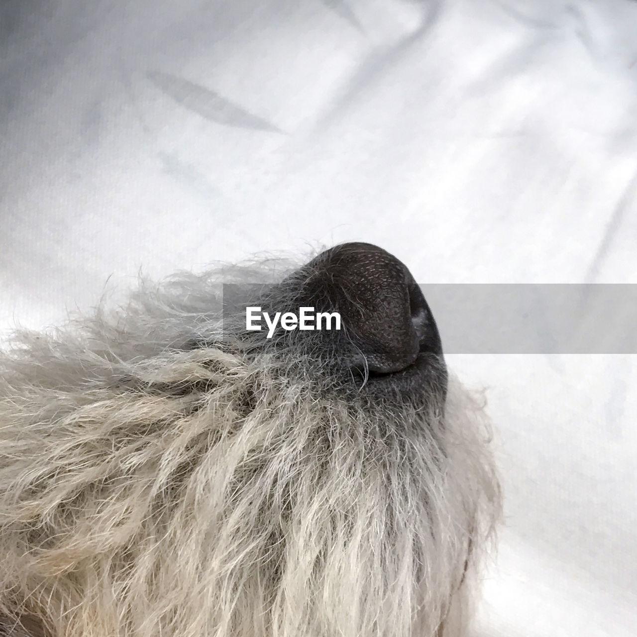 Close-Up Of Dog Nose