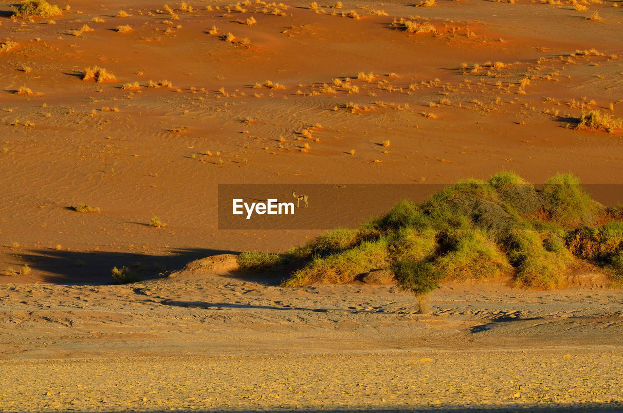 land, environment, sand, landscape, scenics - nature, tranquility, desert, nature, beauty in nature, no people, tranquil scene, non-urban scene, day, climate, arid climate, plant, remote, animal, outdoors, sand dune, semi-arid