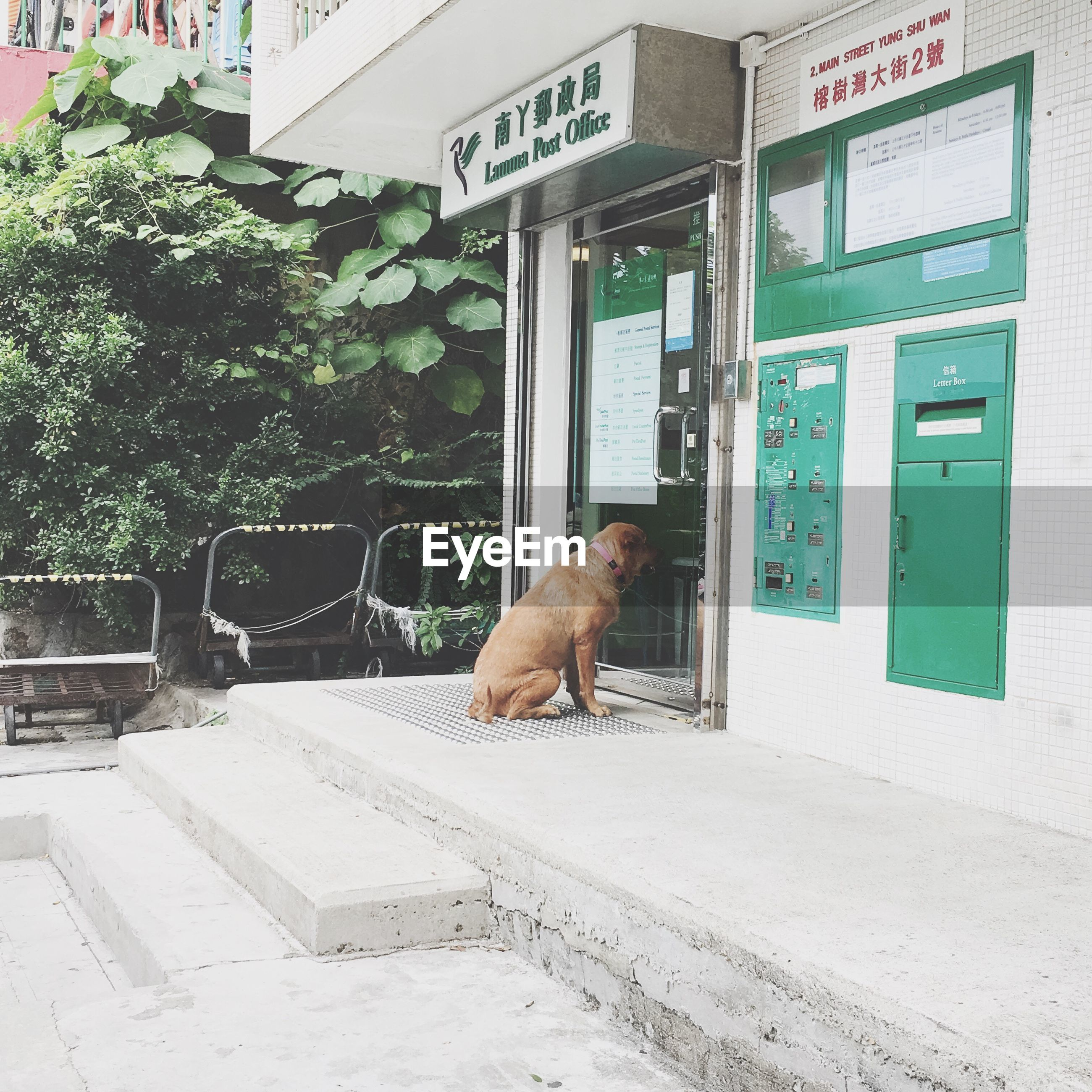 animal themes, one animal, text, dog, domestic animals, mammal, city, outdoors, no people, day