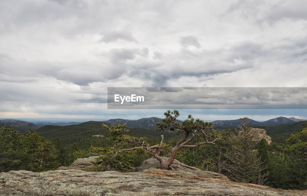 nature, tree, tranquil scene, tranquility, scenics, cloud - sky, beauty in nature, landscape, sky, day, no people, mountain, outdoors, growth, dead tree