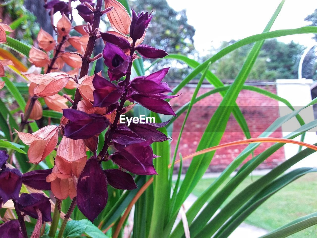 plant, flowering plant, flower, beauty in nature, growth, fragility, vulnerability, close-up, freshness, petal, plant part, leaf, nature, pink color, day, inflorescence, focus on foreground, no people, flower head, outdoors, purple