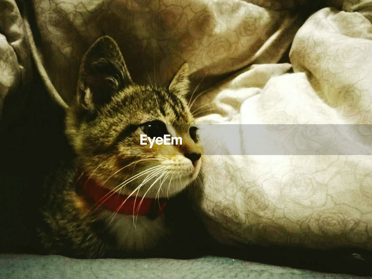 one animal, animal themes, pets, domestic animals, domestic cat, mammal, whisker, feline, indoors, day, close-up, no people