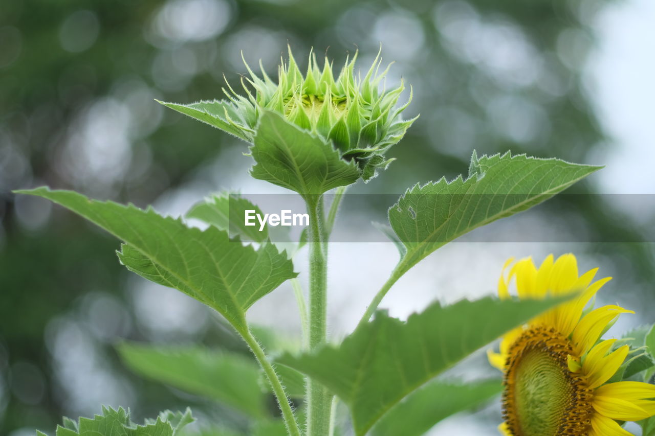 green color, leaf, growth, plant, nature, flower, freshness, beauty in nature, outdoors, day, fragility, close-up, focus on foreground, no people, flower head