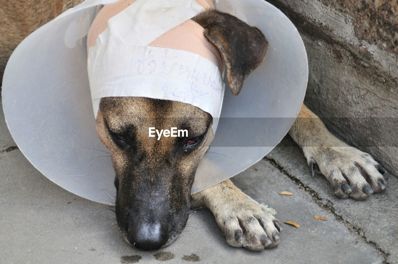 High Angle View Of Injured Dog Wearing Protective Collar On Footpath
