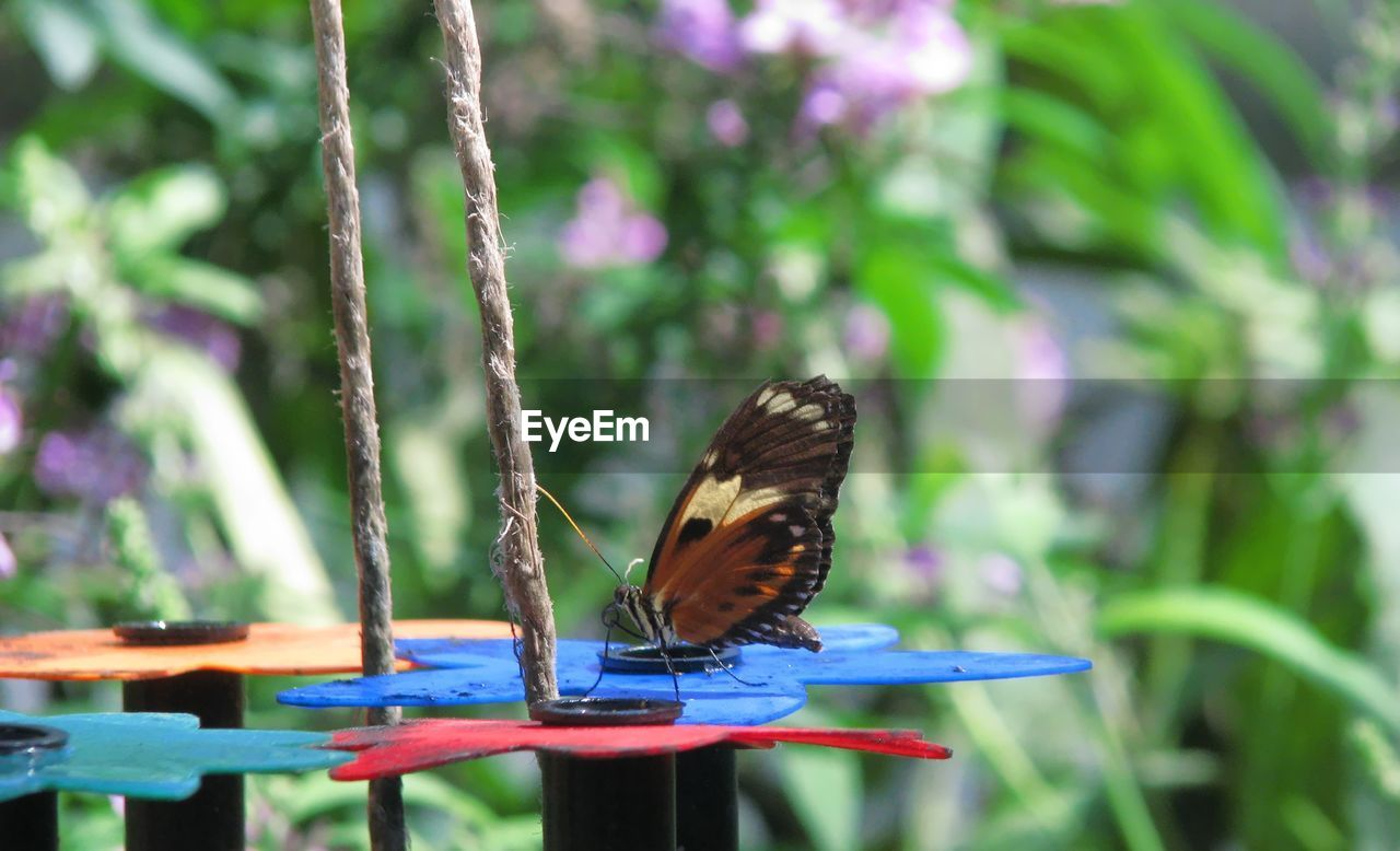 animal themes, animal, one animal, animal wildlife, animals in the wild, bird, focus on foreground, plant, vertebrate, animal wing, invertebrate, insect, day, beauty in nature, no people, nature, close-up, butterfly - insect, outdoors, flying, purple, pollination