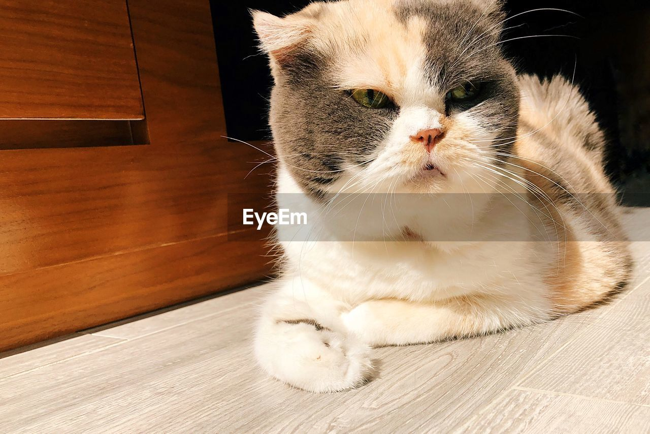 domestic, cat, domestic cat, pets, feline, mammal, domestic animals, one animal, animal themes, animal, vertebrate, whisker, indoors, flooring, no people, close-up, sitting, looking, relaxation, looking away, wood