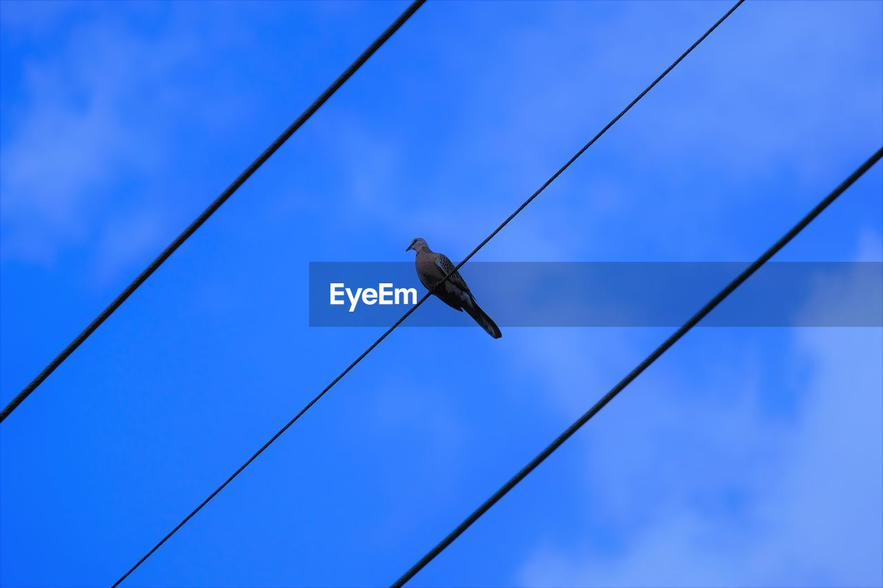 LOW ANGLE VIEW OF BIRD PERCHING ON CABLE AGAINST SKY