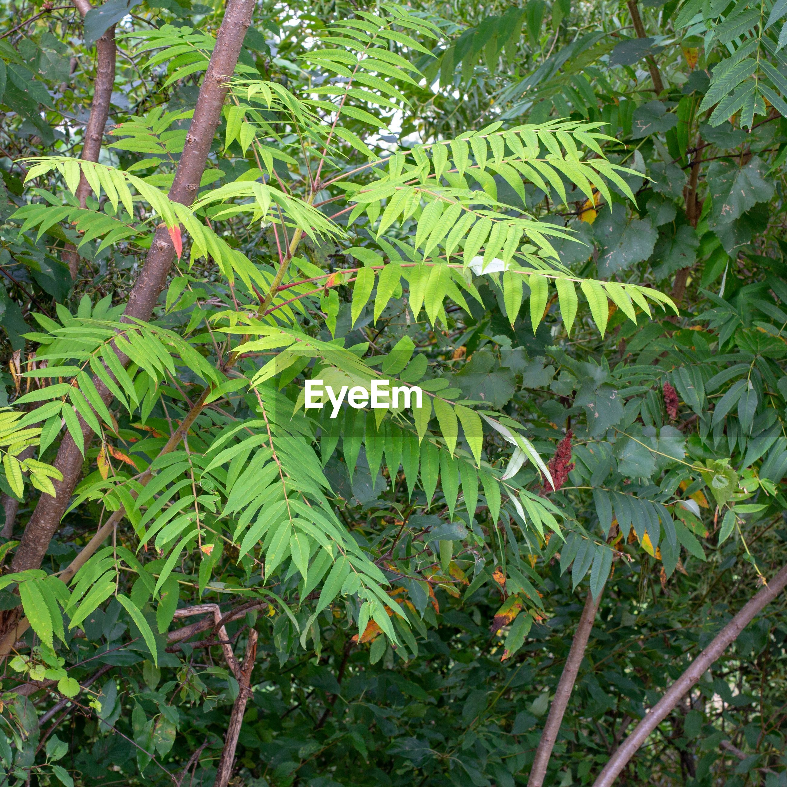 plant, growth, green color, leaf, plant part, tree, beauty in nature, nature, day, no people, tranquility, outdoors, close-up, branch, fern, forest, freshness, land, foliage, botany