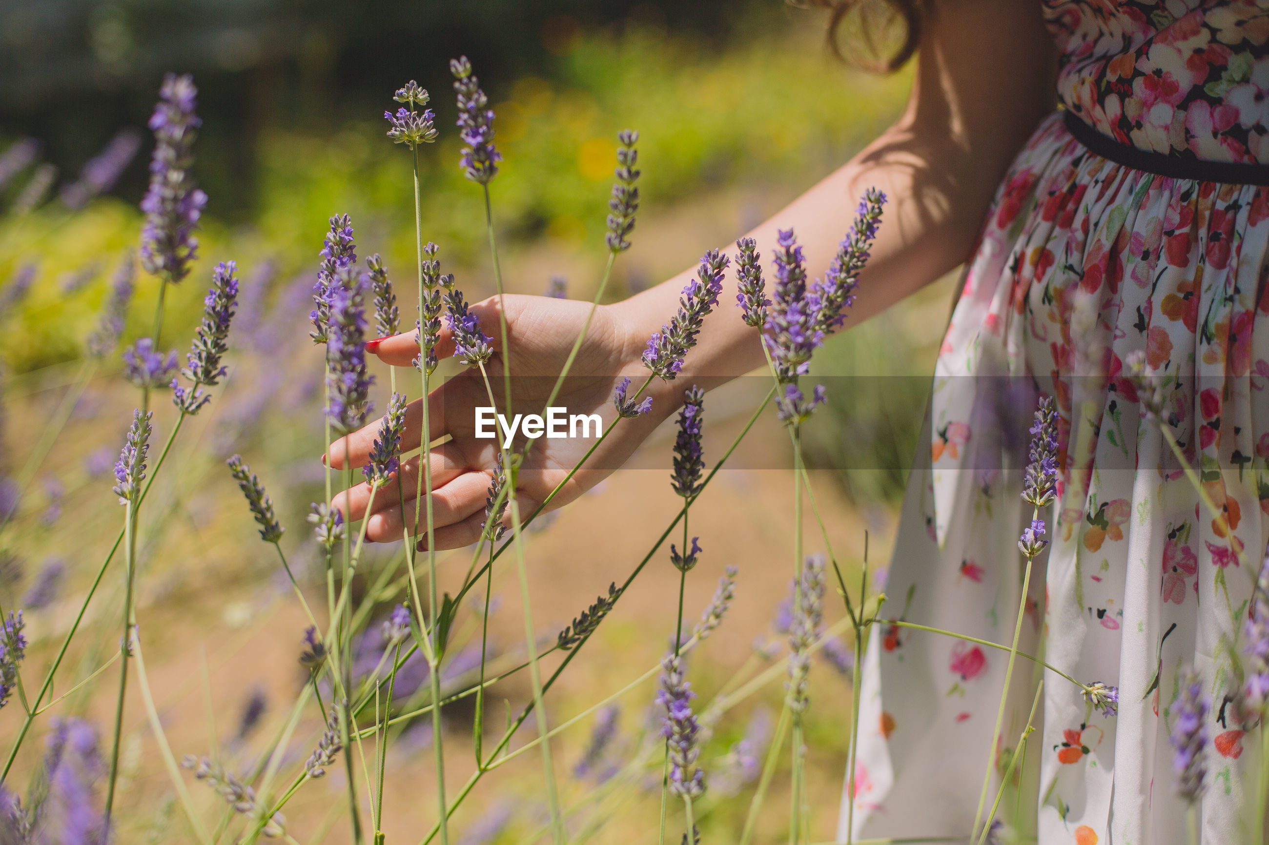 Midsection of woman touching flowering plants on field