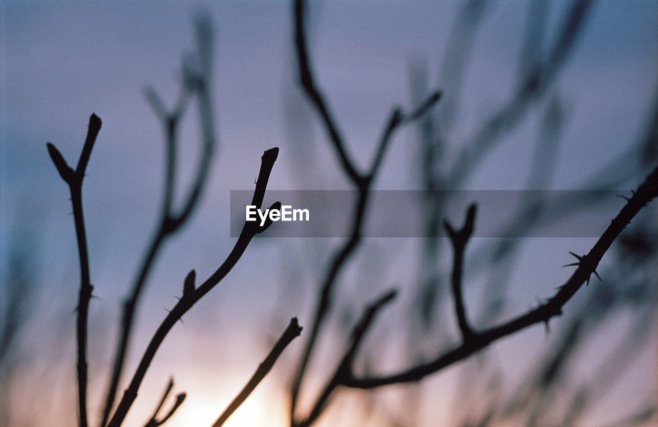 nature, branch, plant, outdoors, growth, no people, close-up, day, beauty in nature, bare tree, tree, sky