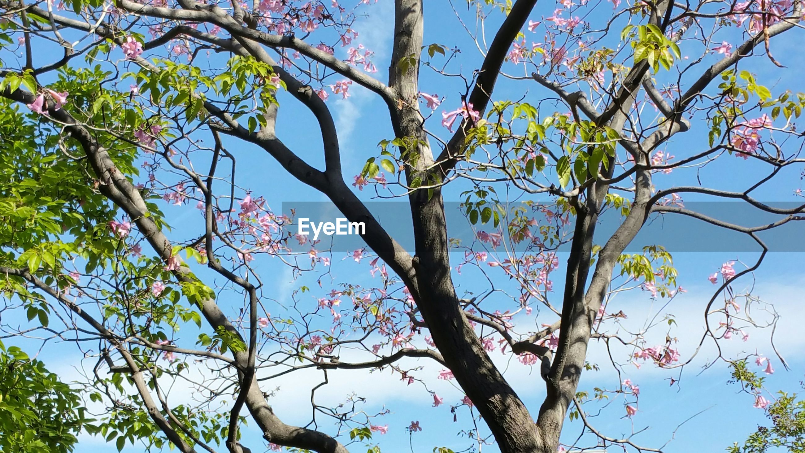 Low angle view of flower tree