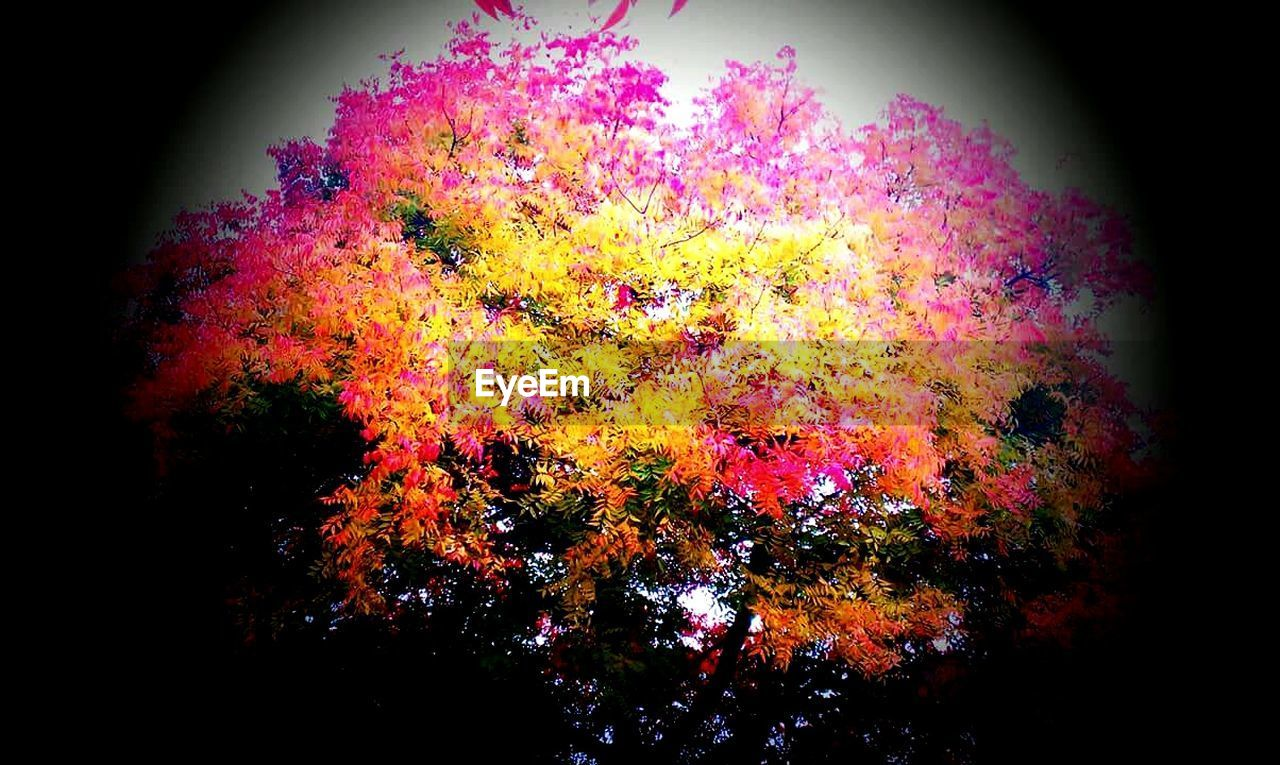 multi colored, no people, celebration, tree, outdoors, beauty in nature, nature, close-up, day