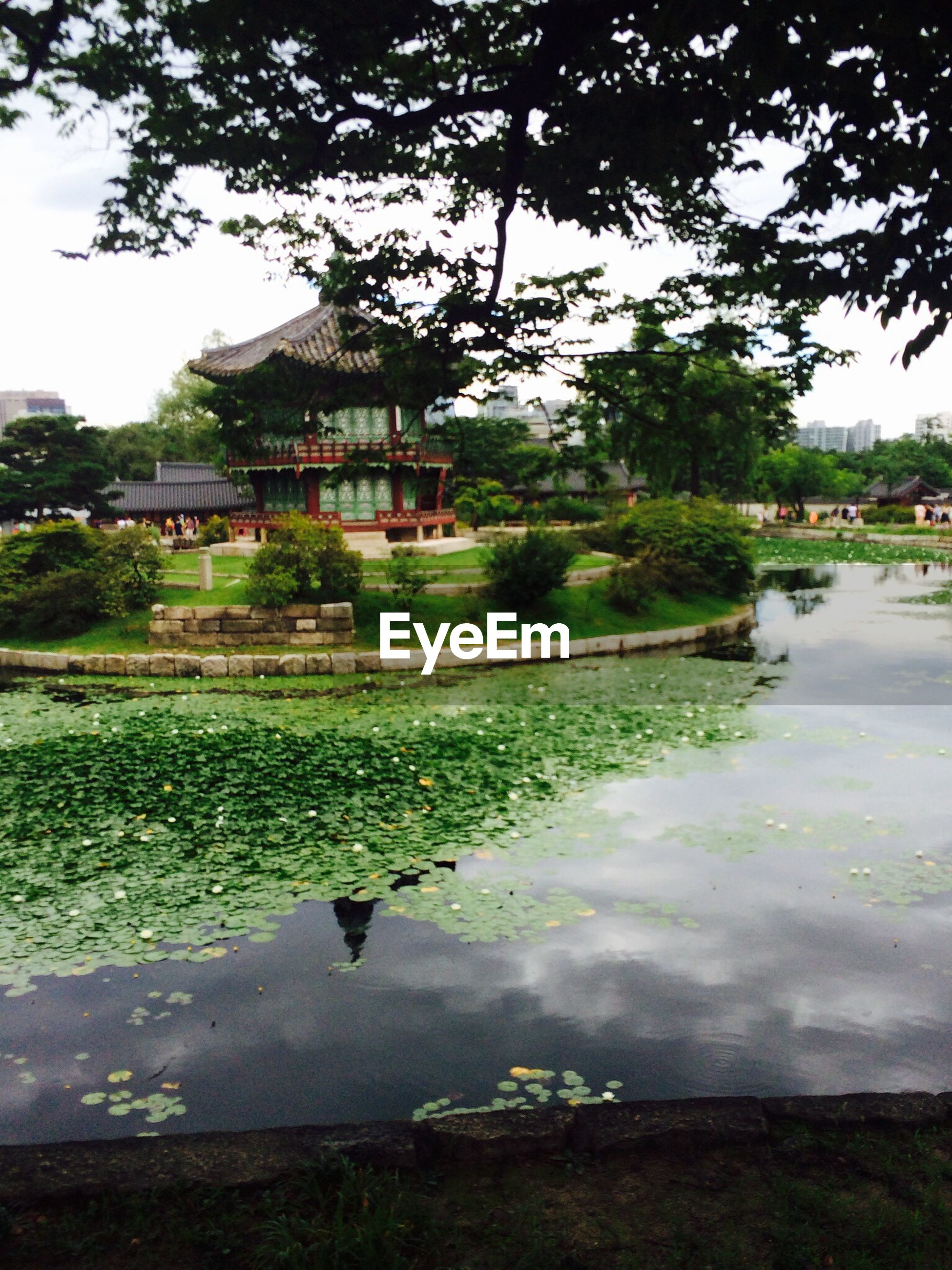 water, tree, architecture, built structure, building exterior, pond, grass, reflection, park - man made space, green color, nature, lake, fountain, bird, river, day, sky, growth, tranquility, outdoors