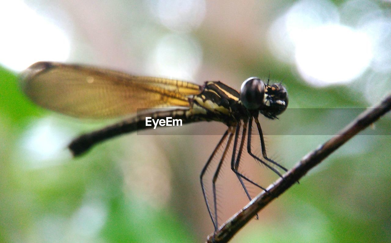 insect, invertebrate, animals in the wild, animal themes, animal wildlife, animal, one animal, animal wing, close-up, focus on foreground, dragonfly, no people, day, selective focus, nature, plant, outdoors, animal body part, fly, damselfly, animal eye