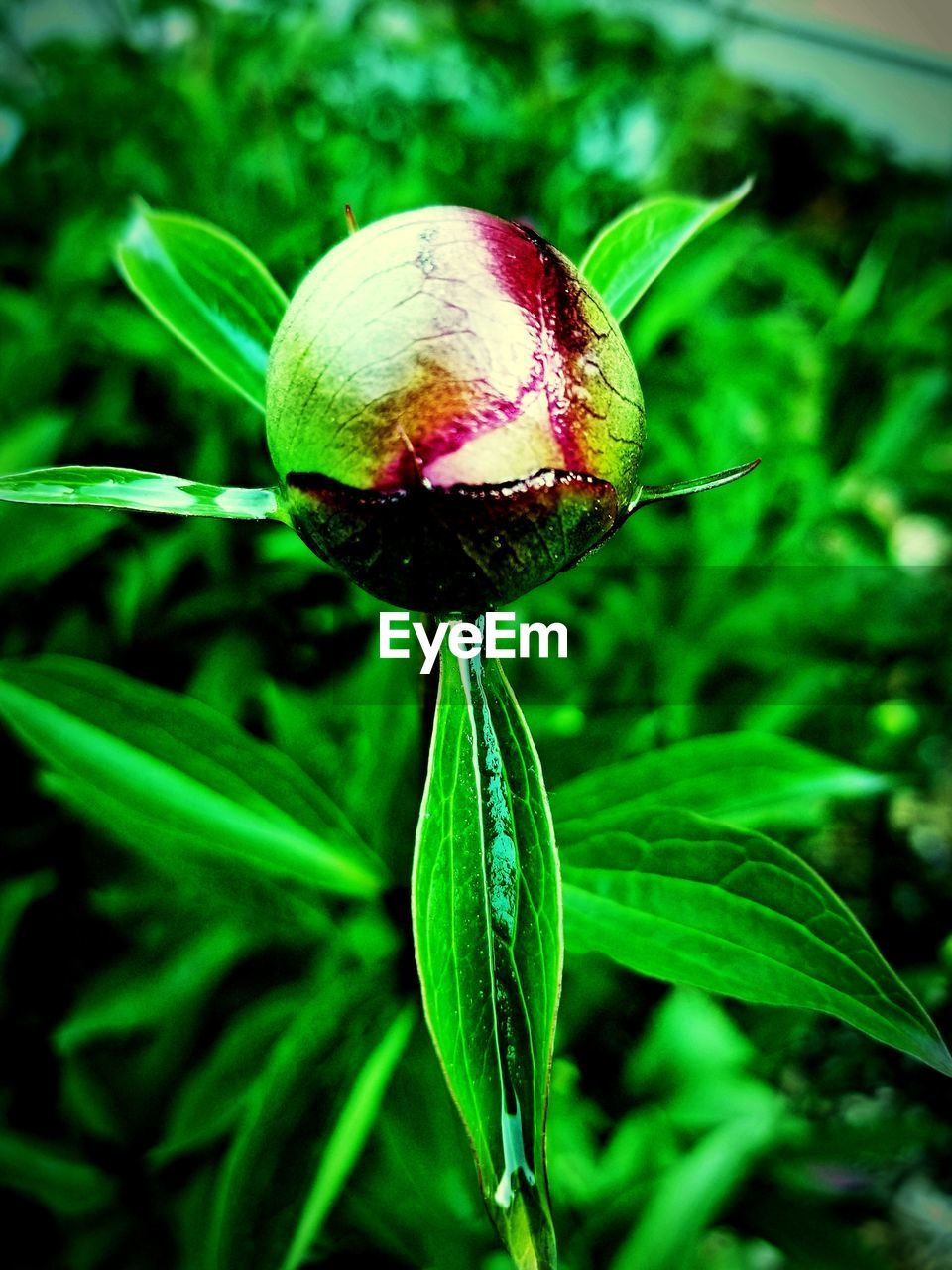 growth, plant, close-up, green color, beauty in nature, nature, leaf, plant part, freshness, fragility, food, vulnerability, no people, focus on foreground, vegetable, day, land, flower, outdoors, field