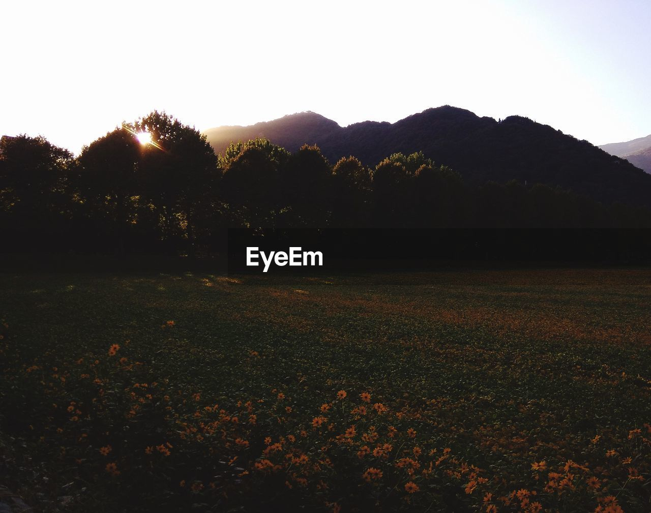 sky, beauty in nature, tranquility, tranquil scene, plant, scenics - nature, mountain, landscape, environment, nature, no people, sunset, land, tree, growth, field, non-urban scene, idyllic, mountain range, outdoors