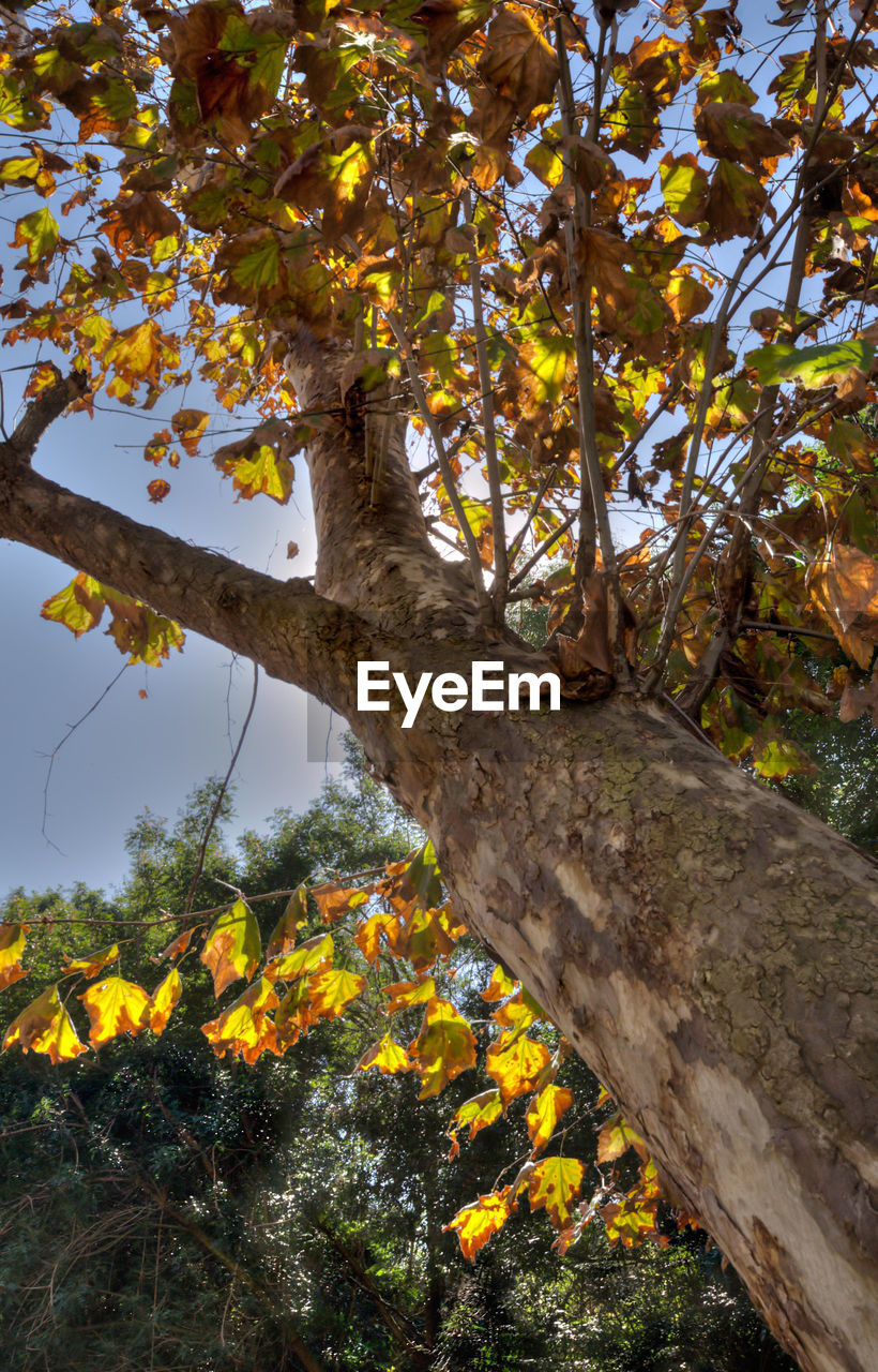 tree, tree trunk, growth, nature, branch, outdoors, day, leaf, beauty in nature, flower, low angle view, no people, yellow, scenics, close-up, sky, freshness