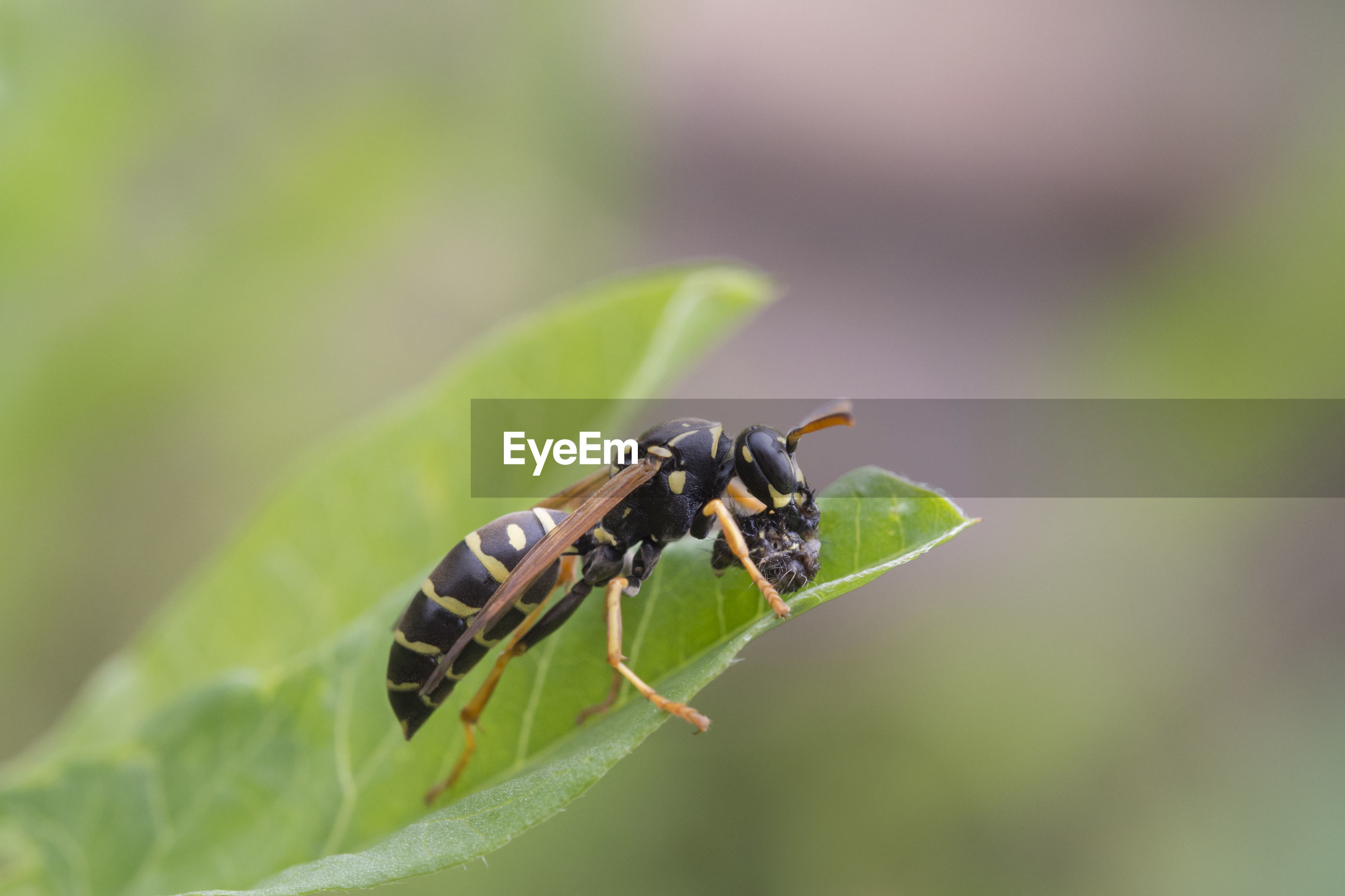 CLOSE-UP OF INSECT PERCHING ON LEAF