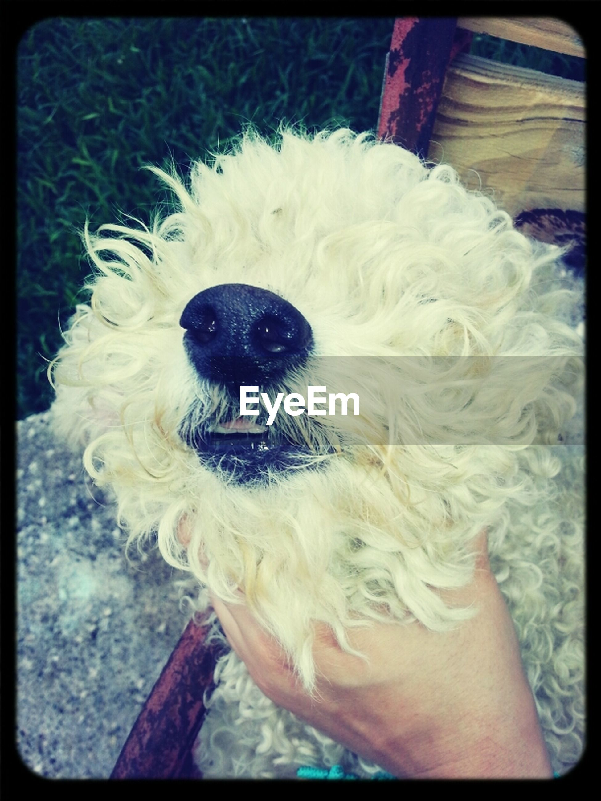 one animal, animal themes, pets, dog, transfer print, domestic animals, auto post production filter, white color, high angle view, close-up, part of, animal head, holding, person, unrecognizable person, mammal, cute