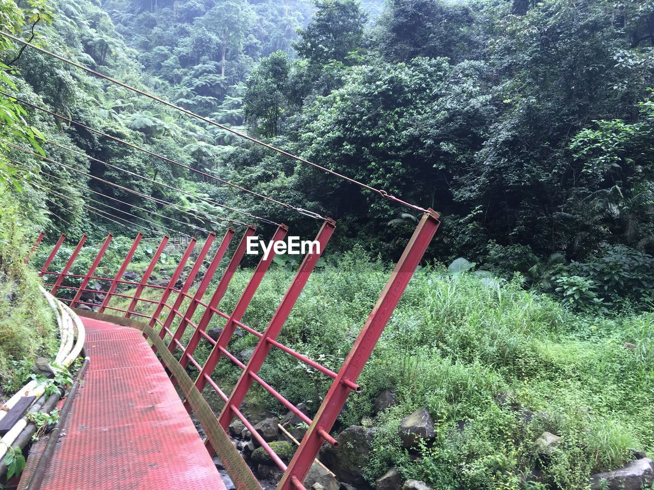 tree, growth, railing, lush foliage, forest, day, green color, nature, outdoors, no people, plant, tranquility, beauty in nature, scenics, footbridge